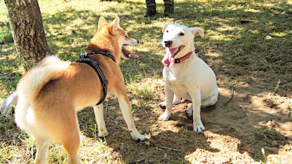 chien Canicaro, seance de comportementaliste canin