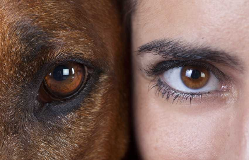 chien Canicaro, seance d'education et comportementaliste blog