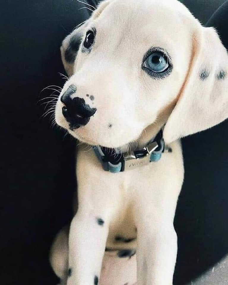 Educateur canin, appretissage s'oublie s'il n'est pas pratiqué