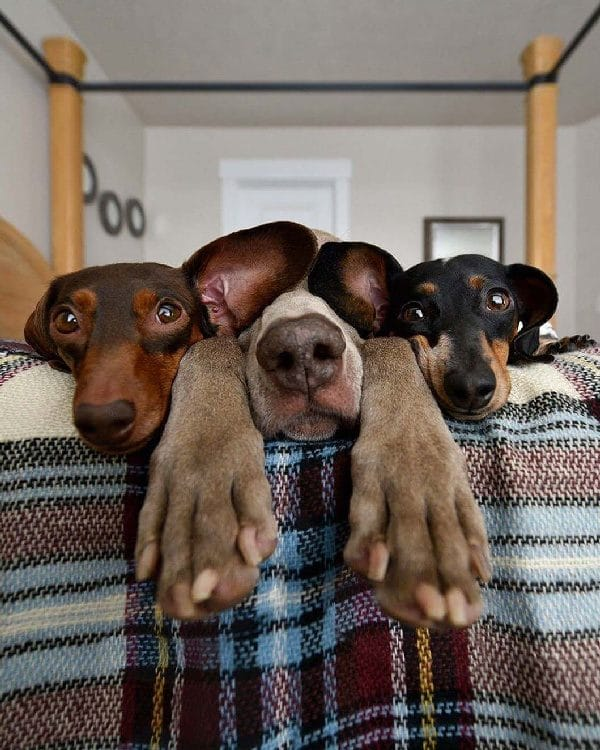 Comportementaliste canin, désobeit
